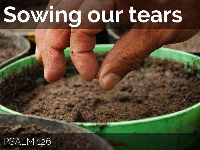 sowing tears